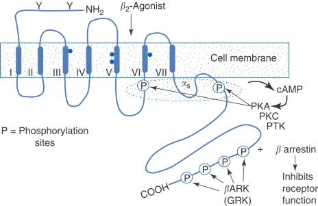 hipertónia receptor antagonistáira)