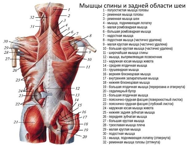 az izom hipertóniára jellemző
