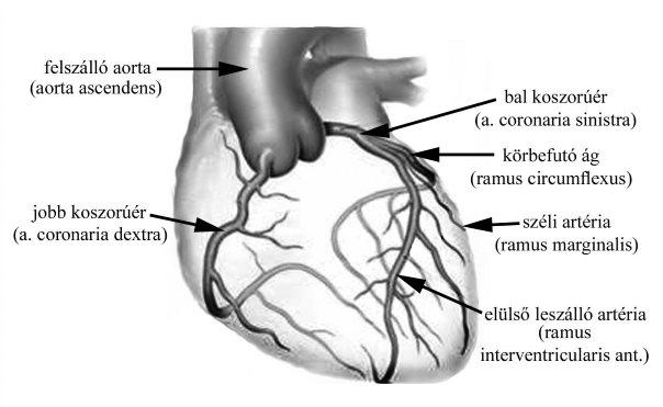 magas vérnyomás esetén az erek keskenyek vagy kitágulnak)