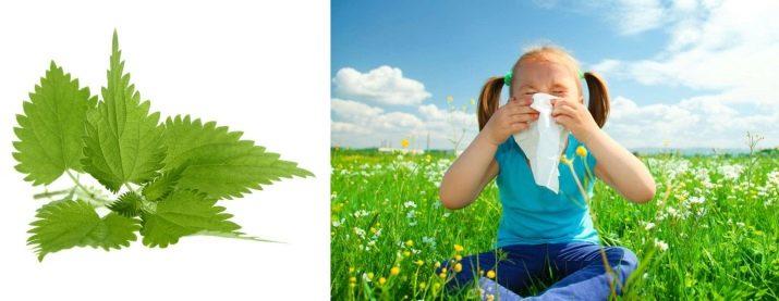 az ivan tea előnyei a magas vérnyomás ellen