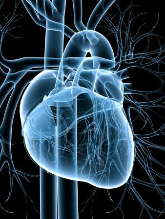 szívhatáron magas vérnyomás