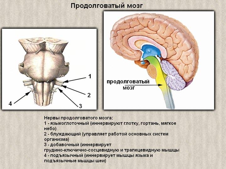masszázs osteochondrosis magas vérnyomás)
