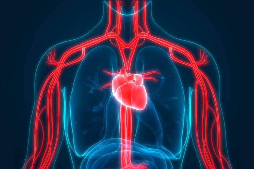 A visszatartott vizelet és a vérnyomás