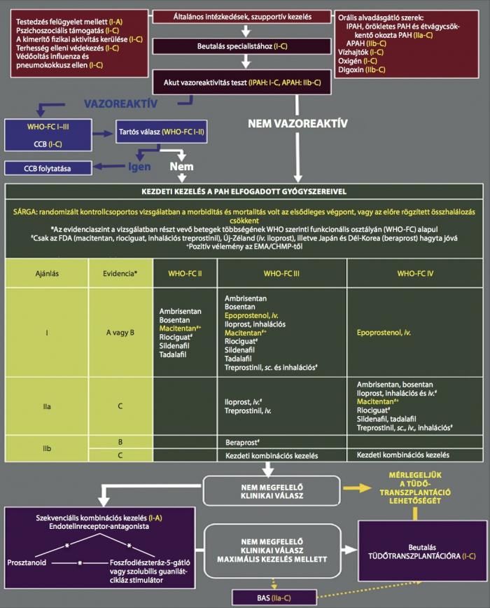 Újdonságok a Hipertónia Napon | Anatómiai Szövet- és Fejlődéstani Intézet