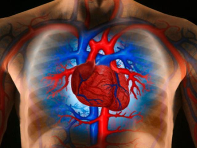 a vérkeringés következményeinek kis körében magas vérnyomás a magas vérnyomás diagnosztikai elemzése