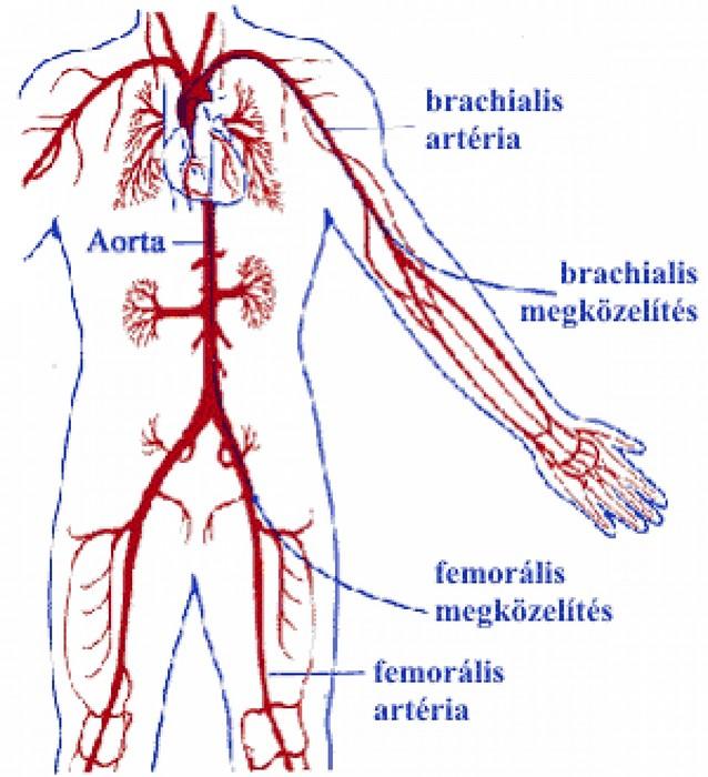 magas vérnyomás vérellátás