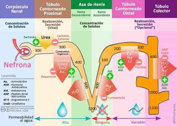 hipertónia és hipotenzió egyszerre)