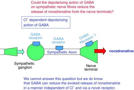 hipertónia receptor antagonistáira