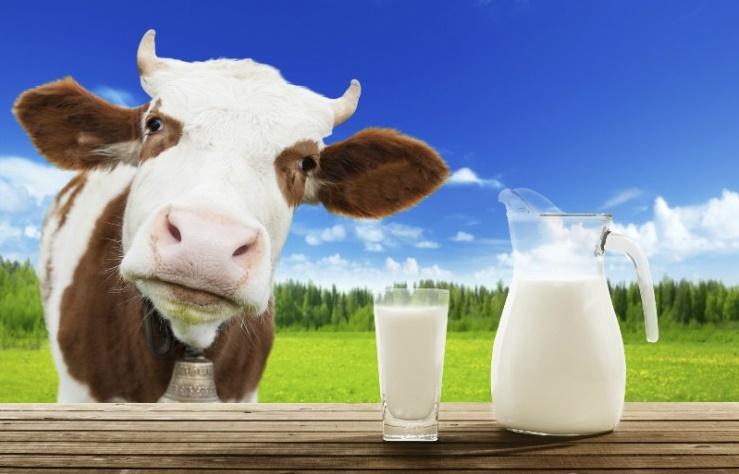magas vérnyomás és erjesztett tejtermékek)