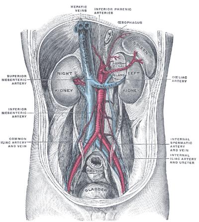 A nefrózis szindróma (veseeredetű tünetegyüttes)