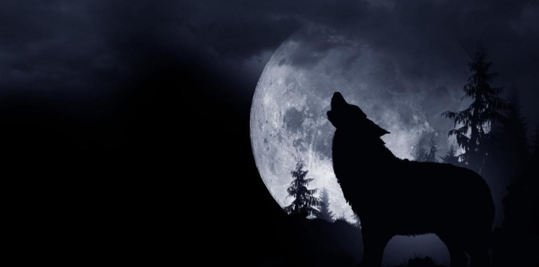 A holdciklusok hatásai – telihold – Natúrsziget