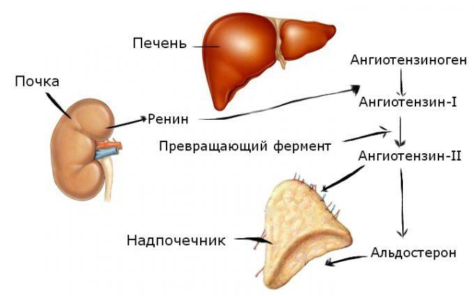 a vese magas vérnyomásának patogenezise