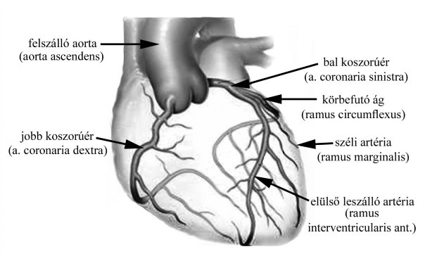 a nyak és a fej erek magas vérnyomásban