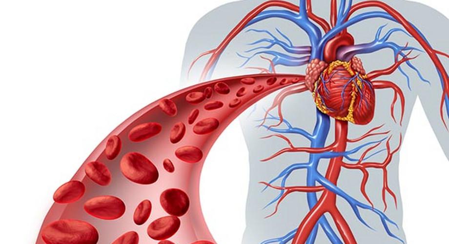 Vérkeringés - Magas vérnyomás November