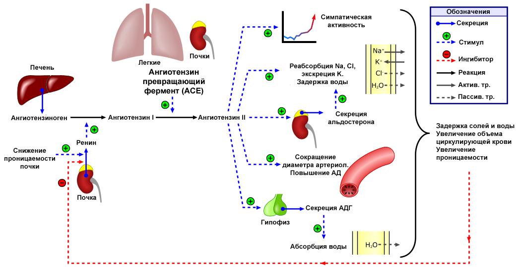 magas vérnyomás 2 fok 2 fokozatú kockázat rák és magas vérnyomás kombinációja