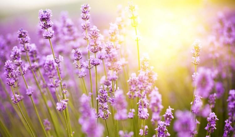 tavasz és magas vérnyomás)