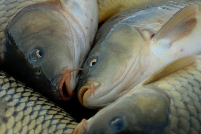 magas vérnyomás és sózott hal