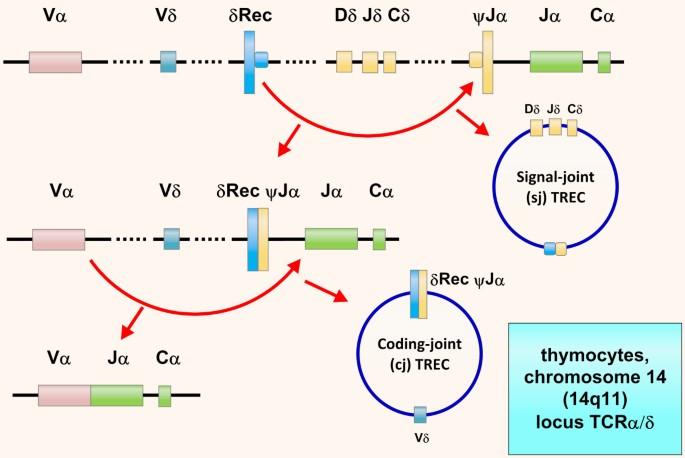 Angiotenzin-II-receptor-antagonisták