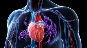 hogyan lehet megtalálni a magas vérnyomás okát