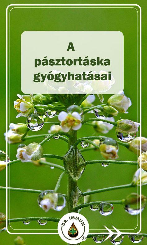 pásztortáska magas vérnyomás ellen)